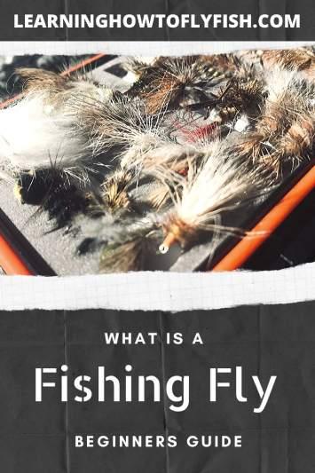 flies in fly box