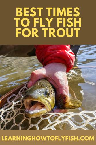 best time of day to fly fish for trout